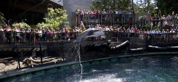 Show för Vancouver akvariumdelfin Arkivfoto