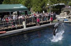 Show för Vancouver akvariumdelfin Arkivfoton