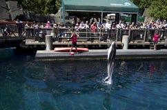 Show för Vancouver akvariumdelfin Arkivbilder