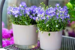 Show-fall av blomsterhandeln Royaltyfri Fotografi