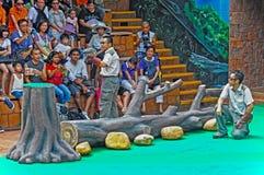 show för park för fågelHong Kong hav Arkivfoton