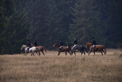 Show Horse Hunt Club Stock Photo