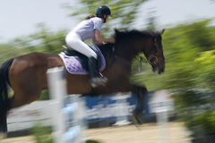 Show Jumper. A show jumper at a contest Royalty Free Stock Photos