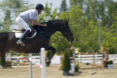 Show Jumper. A show jumper at a contest Royalty Free Stock Image