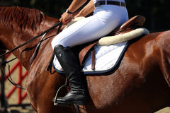 Show jumper horse during training with unidentified rider Stock Photography
