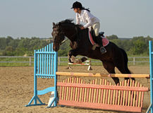 Show jumping Stock Photography