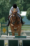 Show jumping. Teen girl riding brown horse in arena during equestrian show event Stock Photos