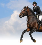 Show jumping. Woman and bay horse Stock Photo
