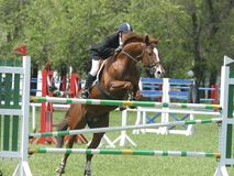Show jumping. Rider on a horse jumping over obstacle Stock Photo