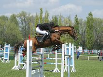 Show jumping. Rider on a horse jumping over obstacle stock image