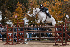 Show Jumping Competition Stock Images