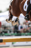 Show jumping. Crop of show jumping horse Stock Photo