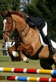 Show Jumping Horse And Rider Royalty Free Stock Images