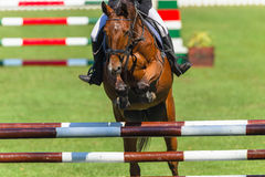 Show Jumping Horse Closeup Head On Stock Photo