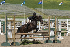 Show jumping horse and rider Royalty Free Stock Photos