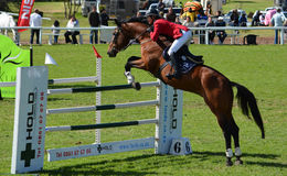Show jumping horse and rider Stock Photography
