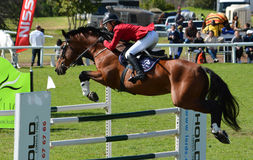 Show jumping horse and rider Royalty Free Stock Photography
