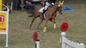Show jumping with horses Stock Image