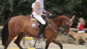 Show jumping with horses Stock Photos