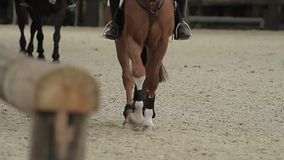 Show jumping with horses Stock Images
