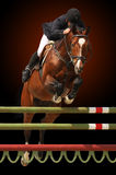 Show jumping isolated on dark Stock Images
