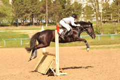 Show Jumping Open Championship in Chisinau 2012. Chisinau, Moldova - April 29, 2012: Show Jumping Open Championship in Chisinau. A rider above a jump fence on a Stock Image
