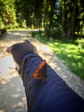 Show me the way. A butterfly shows a mountain biker the way trough the forest Stock Photography