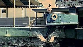 Show Miamis Seaquarium stock video