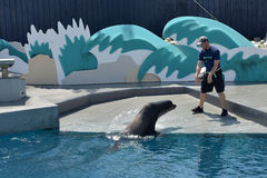 Show with sea lions in the aquarium in New York Stock Image