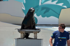Show with sea lions in the aquarium in New York Stock Images