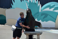 Show with sea lions in the aquarium in New York Stock Photos
