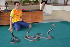 Show of snakes performer play with cobra during a show in a zoo royalty free stock photo