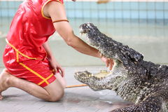 Show to catch crocodiles. Stock Photography