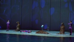 Show of walrus at the Center for Oceanography and Marine Biology Moskvarium stock footage video stock video