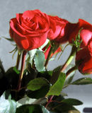 Show you care. Close up of some red long stem roses Stock Images