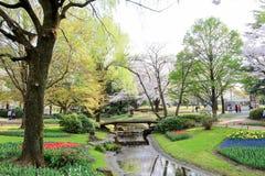 Showa Kinen KoenShowa Memorial Park, Tachikawa, Tokyo, Japan på April 13,2017: Härlig tulpanträdgård i vår Arkivbild
