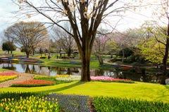 Showa Kinen KoenShowa Memorial Park, Tachikawa, Tokyo, Japan på April 13,2017: Härlig tulpanträdgård i vår Royaltyfri Fotografi