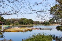 Showa Kinen KoenShowa Memorial Park, Tachikawa, Tokyo, Japan på April 13,2017: Skovelfartyg och vattencyklar i dammet Royaltyfria Foton