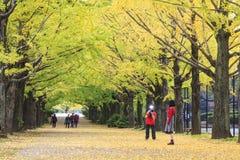 Showa Memorial Park Royalty Free Stock Images