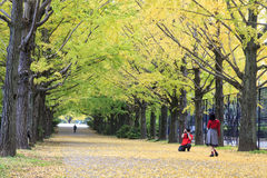 Showa Memorial Park Stock Images