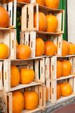 Showcase with different shapes of many pumpkins royalty free stock photography