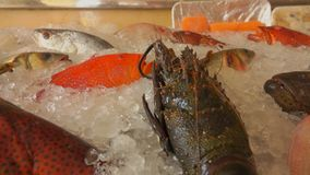 Various types of fish and crustaceans. Showcase of a fish restaurant with various types of fish and crustaceans stock footage