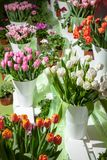 Showcase with fresh bouquets of tulips in vases stock photo