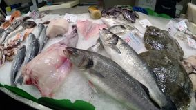 Showcase with Fresh Seafood in La Boqueria Fish Market. Barcelona. Spain. Showcase with Seafood in La Boqueria Fish Market. Barcelona. Spain. Counter with stock video