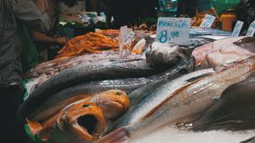 Showcase with Seafood in Ice at La Boqueria Fish Market. Barcelona. Spain. Counter with various exotic seafood, fish, crabs, clams, shrimps and more. Seller stock video footage