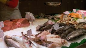 Showcase with Seafood in Ice at La Boqueria Fish Market. Barcelona. Spain. Counter with various exotic seafood, fish, crabs, clams, shrimps and more. Seller stock video