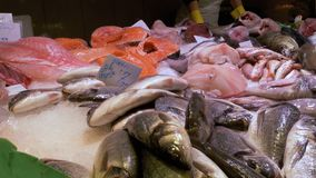 Showcase with Seafood in Ice at La Boqueria Fish Market. Barcelona. Spain. Counter with various exotic seafood, fish, crabs, clams, shrimps and more. Sea food stock video footage