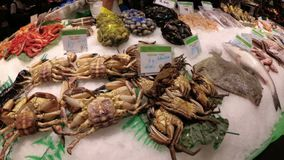 Showcase with Fresh Seafood in La Boqueria Fish Market. Barcelona. Spain. Showcase with Seafood in La Boqueria Fish Market. Barcelona. Spain. Counter with stock video footage