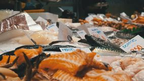 Showcase with Seafood in La Boqueria Fish Market. Barcelona. Spain. Counter with various exotic seafood, fish, crabs, clams, shrimps and more. Sea food and stock video
