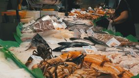 Showcase with Seafood in La Boqueria Fish Market. Barcelona. Spain. Counter with various exotic seafood, fish, crabs, clams, shrimps and more. Sea food and stock video footage
